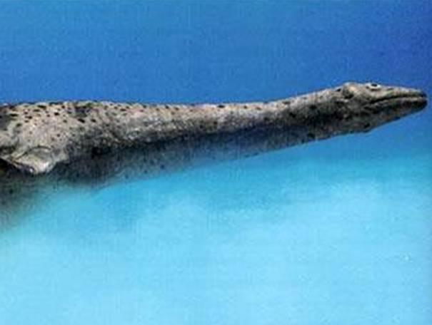 Фото, доказывающие существование лохнесского чудовища