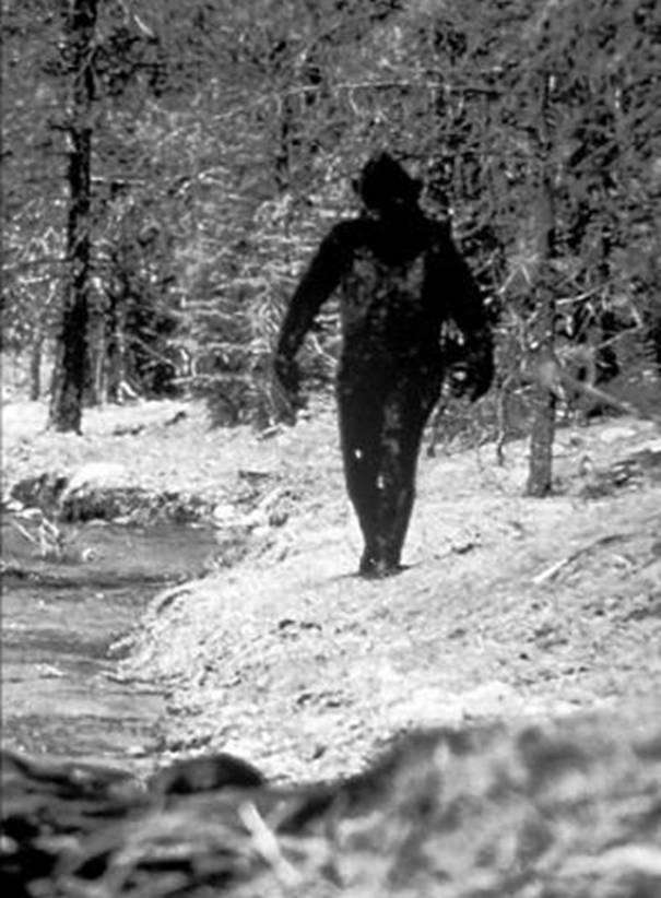 Снежный человек бигфут
