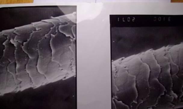 Непознанный мир: что показал анализ ДНК шерсти снежного человека