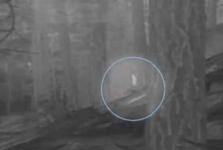Еще одно доказательство реальности снежного человека